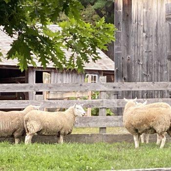 Is that ewe?