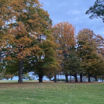 Autumn Palatte