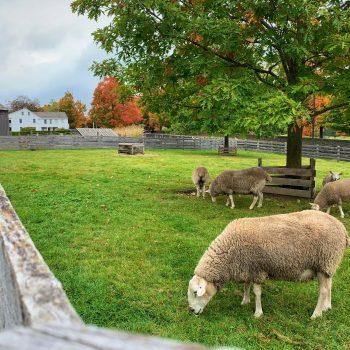 Serene Pasture