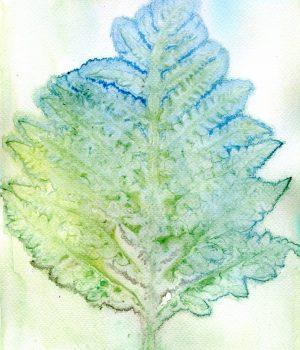onoclea-sensibilis-sensitive-fern