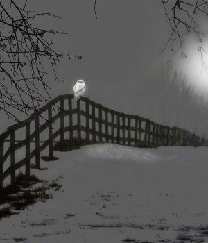 owl-always-see