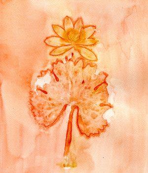 sanguinaria-canadensis-bloodroot