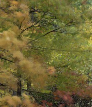 splashes-of-autumn